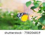 closeup butterfly on flower   | Shutterstock . vector #758206819