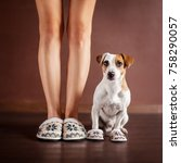 woman and a dog in slippers.... | Shutterstock . vector #758290057