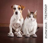 Stock photo cat and a dog in slippers friendship domestic life with pets 758290069