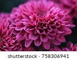 Pink   Purple Little Mum Flowe...