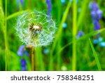 dandelion among mountain grasses | Shutterstock . vector #758348251
