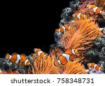 sea anemone and clown fish in... | Shutterstock . vector #758348731