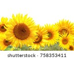 bright yellow sunflowers.... | Shutterstock . vector #758353411