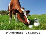 Cow and jug of milk. Emmental region, Switzerland - stock photo