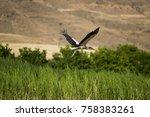flying stork stork starts to... | Shutterstock . vector #758383261