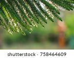 bokeh of coniferous after rain | Shutterstock . vector #758464609
