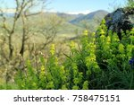 flowers in the background of a... | Shutterstock . vector #758475151