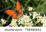 butterfly on flower  close up  | Shutterstock . vector #758480641