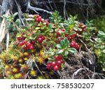 foraging bacground with edible... | Shutterstock . vector #758530207