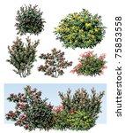 shrub flower   Shutterstock .eps vector #75853558