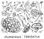 vegetable  illustration of hand ... | Shutterstock .eps vector #758554714