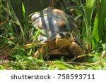the radiated tortoise from... | Shutterstock . vector #758593711