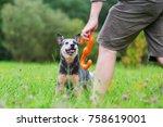 man plays with an australian... | Shutterstock . vector #758619001