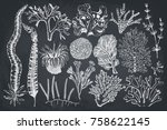 decorative collection of hand... | Shutterstock . vector #758622145