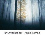 autumn foliage on magical tree...   Shutterstock . vector #758642965