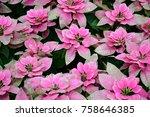pink flower blossom background   Shutterstock . vector #758646385
