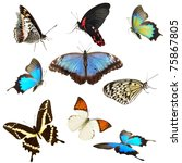 Stock photo butterflies collection 75867805