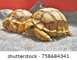 cute portrait of baby tortoise  ... | Shutterstock . vector #758684341
