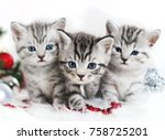 Stock photo kittens are walking in the new year scottish british kittens striped christmas poster 758725201