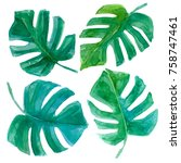 tropical exotic leaves. hand... | Shutterstock . vector #758747461