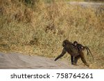 baboons on the street | Shutterstock . vector #758764261