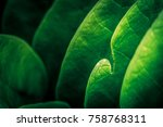 Small photo of Abstract of leave natural background