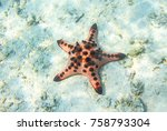red starfish in shallow water... | Shutterstock . vector #758793304