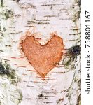 Heart Carved On The Bark Of A...