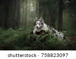 dog border collie in the woods. ... | Shutterstock . vector #758823097