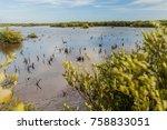 marsh area of sea near trinidad ... | Shutterstock . vector #758833051