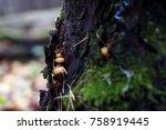 autumn forest. wood mushrooms.... | Shutterstock . vector #758919445