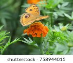 Stock photo butterfly in flower to nature butterfly 758944015