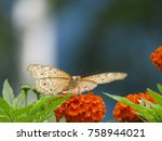 Stock photo butterfly in the flower butterfly isolated 758944021