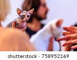 sphynx cat is a breed of cat... | Shutterstock . vector #758952169