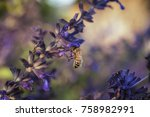 bee on flower | Shutterstock . vector #758982991