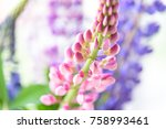 colorful lupines beautiful... | Shutterstock . vector #758993461
