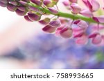 colorful lupines beautiful... | Shutterstock . vector #758993665