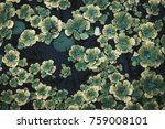 water lily background texture | Shutterstock . vector #759008101
