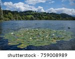 lotus flowers gathered together ... | Shutterstock . vector #759008989