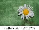 still life of white daisie.... | Shutterstock . vector #759013909