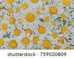 still life of white daisies.... | Shutterstock . vector #759020809