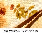 Fallen Leaves On Orange Plasti...