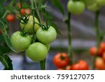 a tomato is a nutrient dense... | Shutterstock . vector #759127075