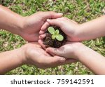 Small photo of Family tree planting, csr world environment, Tu Bishvat (B'Shevat), arbor day concept with young child kid and parent parent's hands holding and protecting small plant seedling on soil together