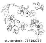 ink  pencil   the leaves and... | Shutterstock .eps vector #759183799