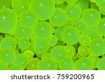 green leaves background   the... | Shutterstock . vector #759200965