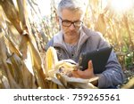 Agronomist In Corn Field...