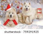 portrait of two samoyed dogs... | Shutterstock . vector #759291925