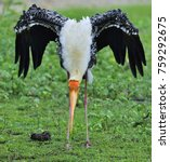 painted stork with open wings...   Shutterstock . vector #759292675