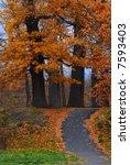 oak avenue. autumn morning in... | Shutterstock . vector #7593403
